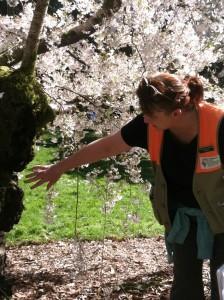 catherine, cherry tree