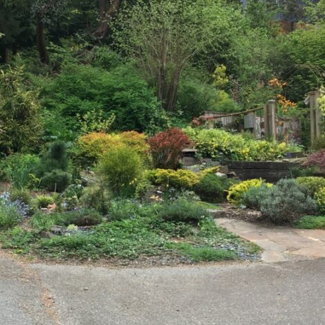 Orchard Street gardens