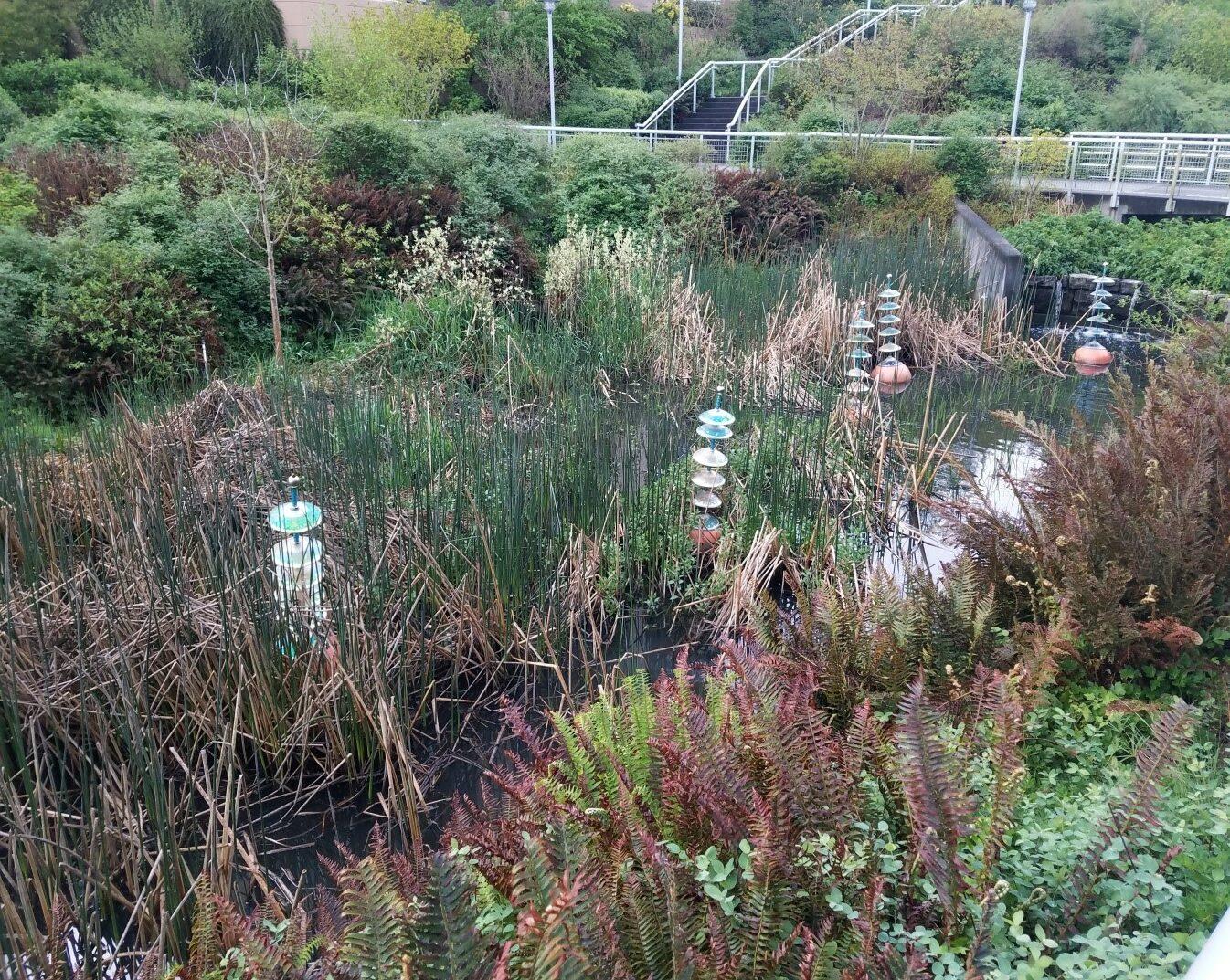 Thorton Creek_biofiltration swale4